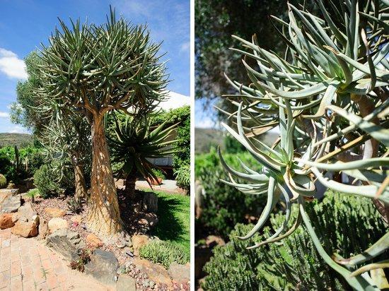 BeauSoleil: Cactus Garden