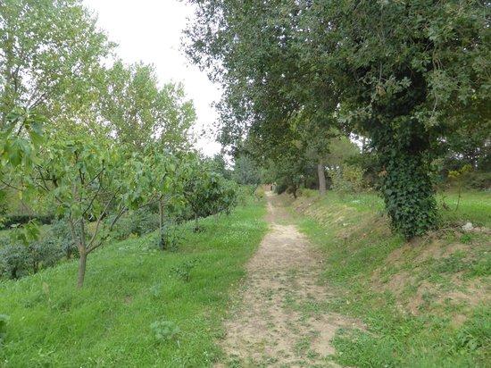 Villa Trigona: Camino exterior