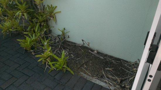 Caribbean Noosa: Gardens?