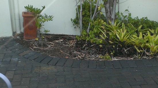 Caribbean Noosa: Garden view