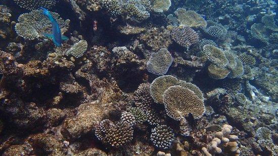 Jumeirah Dhevanafushi: Unterwasserbild direkt vor unserer Water-Villa