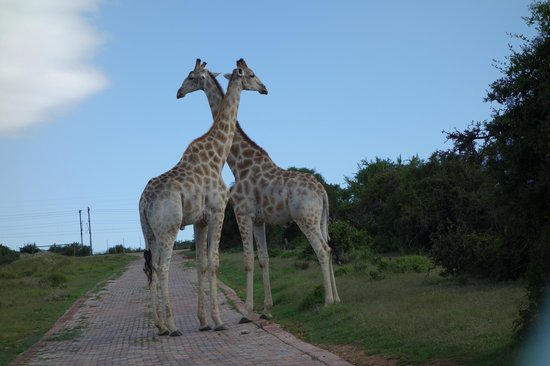 Addo Afrique Estate: Some of the other guests