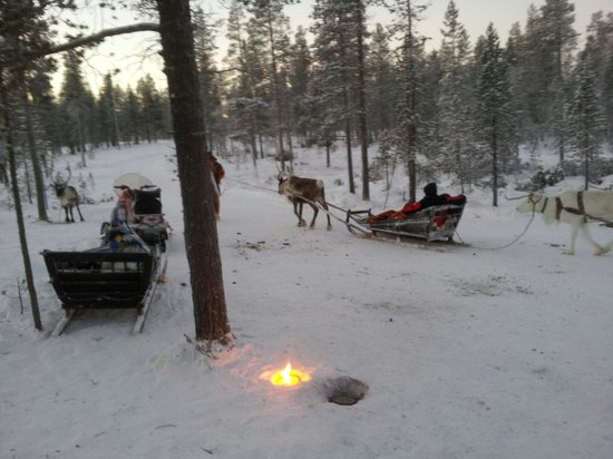 Lapland Safaris: Reindeer ride