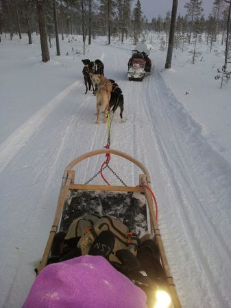 Lapland Safaris: Husky ride