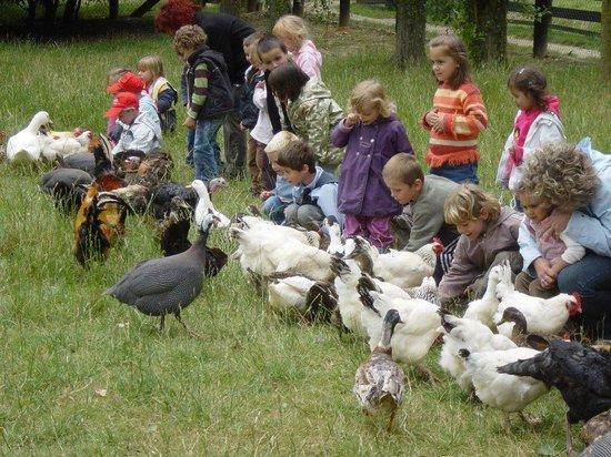 Ferme Pedagogique De Saint-hilliers