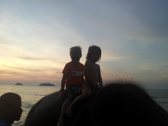 Kaibae Beach Resort : Who needs kids club when you have elephants!