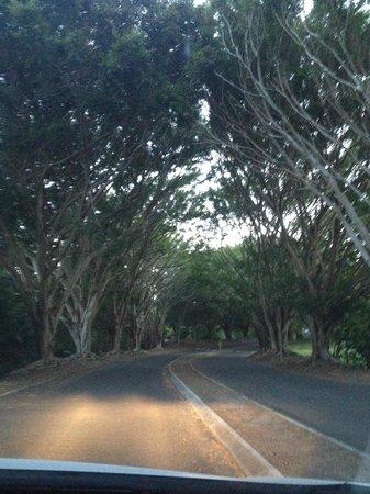 Opal Cove Resort: the driveway