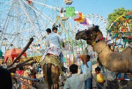 ชัยปุระ, อินเดีย: Camel festival of jaipur rajasthan