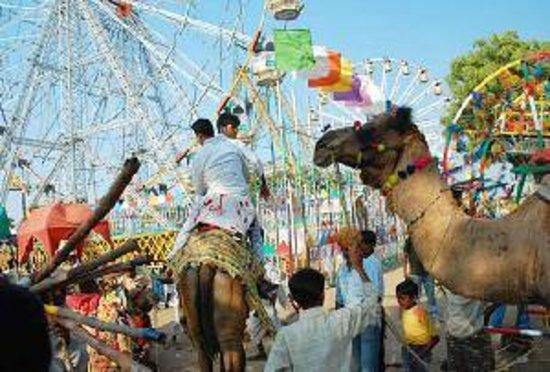 Camel festival of jaipur rajasthan