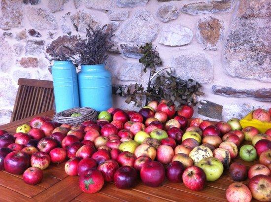 Casa Ramiras: Con éstas preciosas manzanas su dueño prepara unas delicias para acompañar sus platos.....