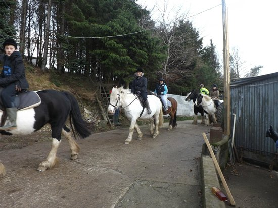 Springhill Farm Riding Stables: Horse Riding