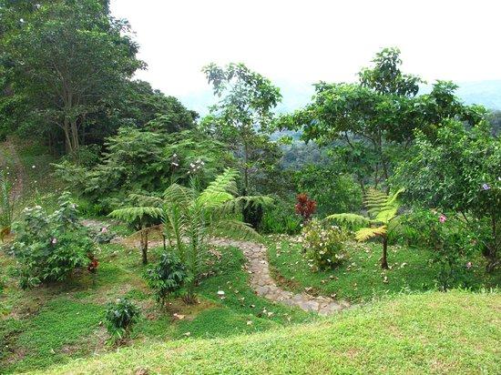Rio Magnolia Nature Lodge: Grounds