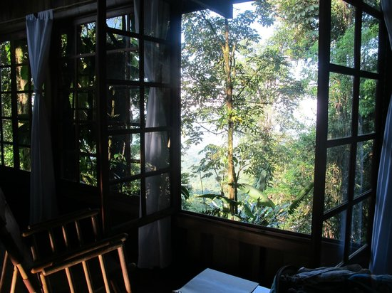Rio Magnolia Nature Lodge: Mono Congo