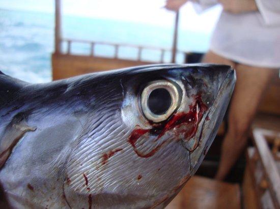 Casa Barabaru: Pesca