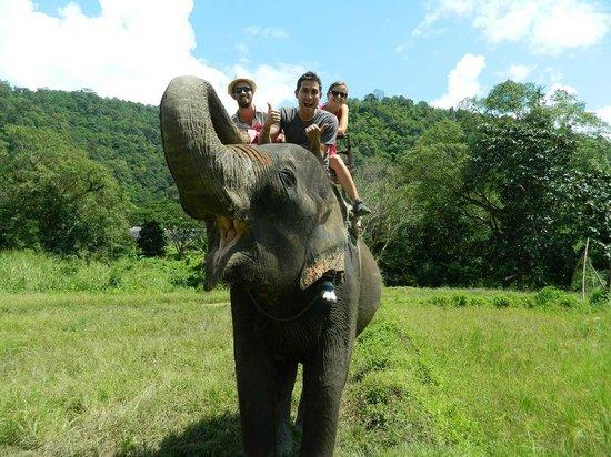 Bamba Experience: Elephant Tour