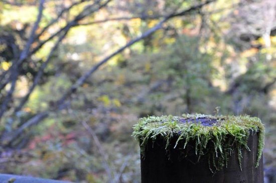 Dakigaeri Valley : The fence and the moss