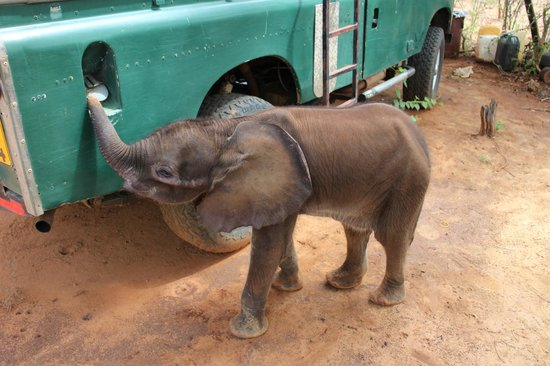 The Elephant Camp: 1-month old baby elephant