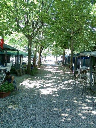 Campeggio Smeraldo: Ben ombreggiato