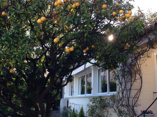 Institut de Francais: Orange tree looking towards the dinning room