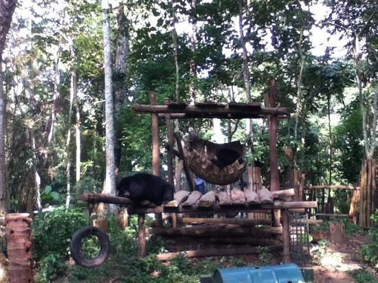 Kuang Si Falls: awwwwww