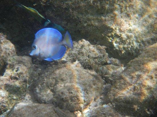 Las Casitas Akumal: Colorful fish everywhere.