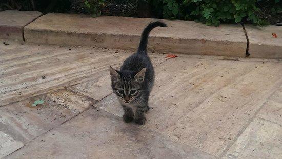 Movenpick Resort & Spa Dead Sea: cute kitties everywhere
