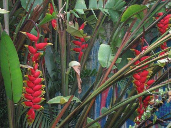 Casa Cool Beans B&B: Garden