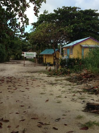 "Ambergris Divers Resort: ""road"" behind the resort"