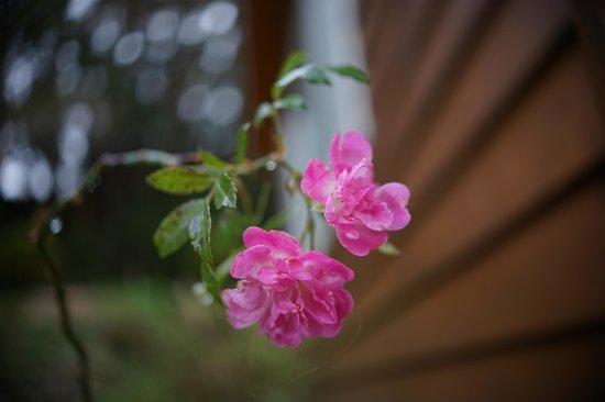 Conjugal Love B&B - La La Mountain: pretty flower