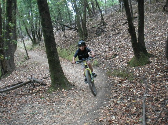 Big Swingin' Cycles - California Mountain Bike Tours