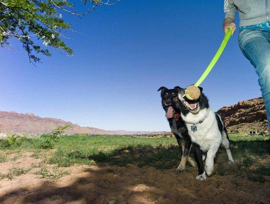 Harmony Farm & Guesthouse: Playful Dogs
