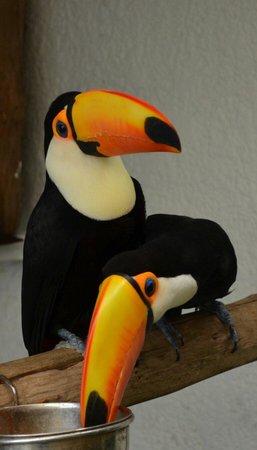 El Tucan: Hermosos los tucanes se nota que los cuidan !!! Mucha suerte