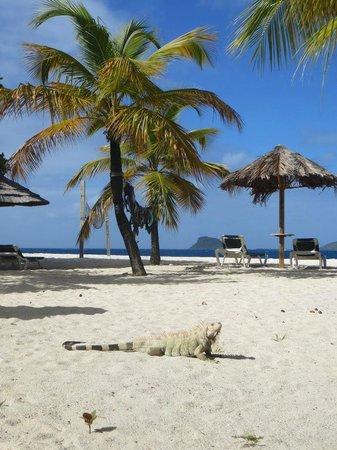 Palm Island Resort & Spa: Our Dail Spot on the Main Beach
