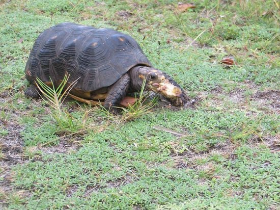 Palm Island Resort & Spa : Found this guy roaming around