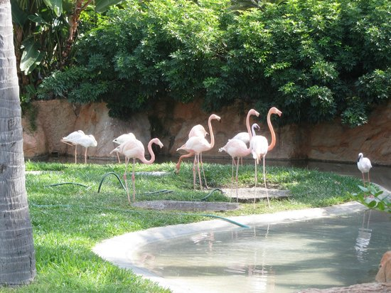 Pueblo Bonito Emerald Bay : Flamingos near the lobby area