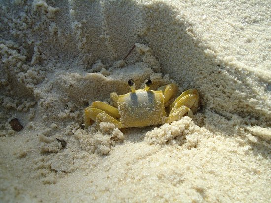 Resort La Torre : Siri na praia