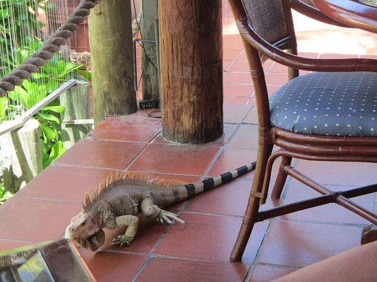 Palm Island Resort & Spa : Lunch visitor