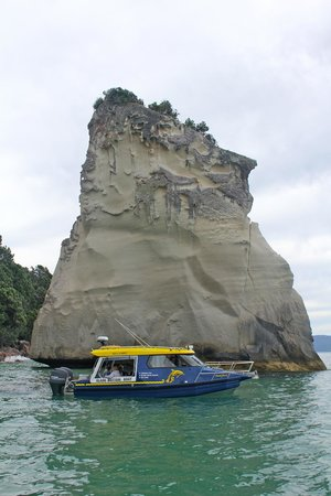 Glass Bottom Boat Whitianga: Te Hoho Rock