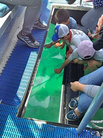 Glass Bottom Boat Whitianga: Viewing the awesome marine life up close