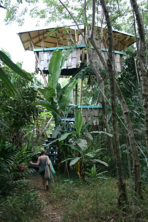 Tropical Treehouse : two story buddha hooch