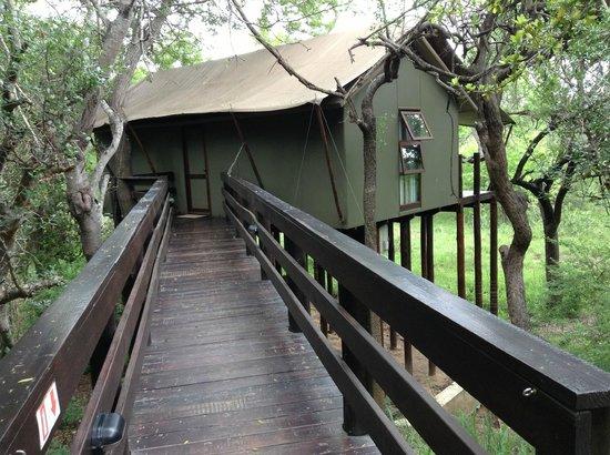 Kapama Buffalo Camp : room tent for 2 pers