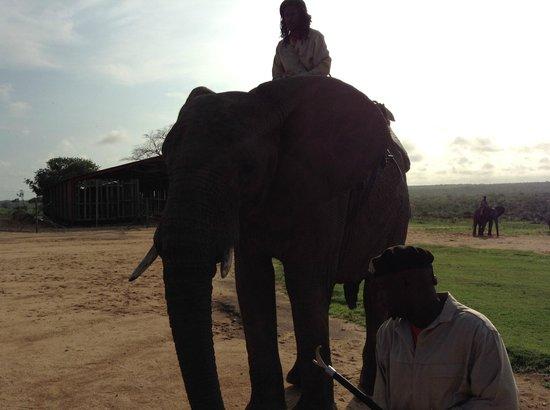Kapama Buffalo Camp : Elephant riding / Elephant schol/santuary