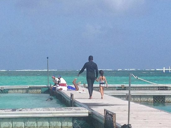 Dolphin Island : Nameless offered a free tour to litlle girl who couldnt swim