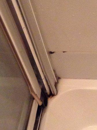 Adelphi Guesthouse: Shower Dirt
