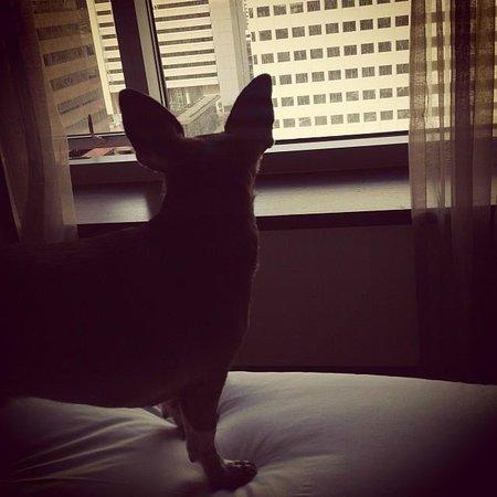 Kimpton Hotel Palomar San Diego: 13th Floor Pet View