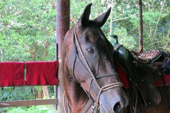 Cabalgata Don Tobias: My horse