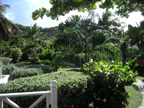Coconut Beach Club: Hotel grounds