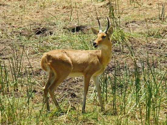 Sanctuary Chief's Camp : Blick von der Hotelterrasse auf wilde Tiere