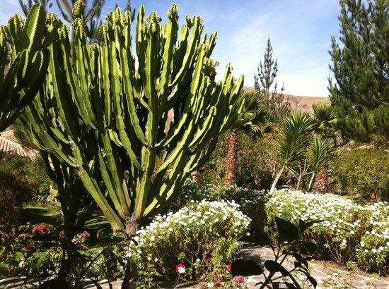 Sol y Luna - Relais & Chateaux: цветущий сад вокруг