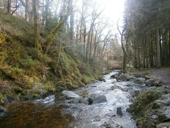 The Hairy Coo - Free Scottish Highlands Tour : Aberfoyle forest